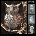 owl-web-allstages.jpg