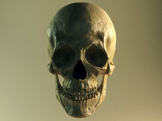 Free Model: Skull blender models and rigging sytems