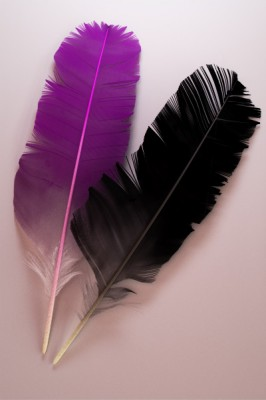Feather study (Cycles) images