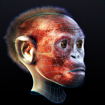 3D reconstruction of the skull of Taung child 3d news