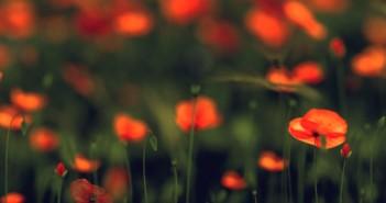 poppy_render