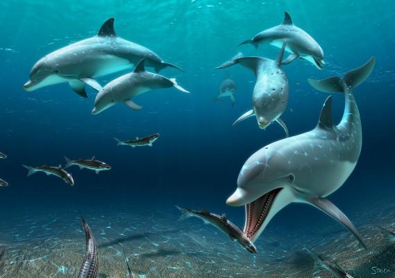 DolphinCrop2_2048wide