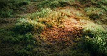 Making a Grass Field