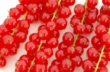Redcurrants by Vicky Brock