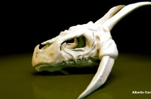 Dragon_Skull_Making_Of