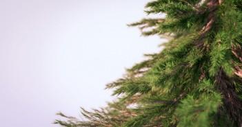 Trees-bonus