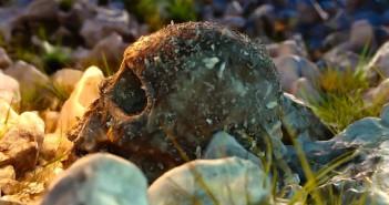 skull fossilization video