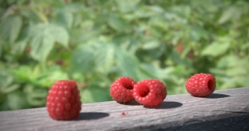 Berries_S