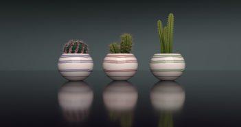 Mini-Cactuses-Title_S