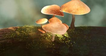 Mushroom.004