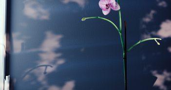 Orchid02_fullRender_06_halfRes