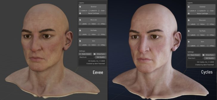 Lex is a high-quality anatomical head reference for Blender
