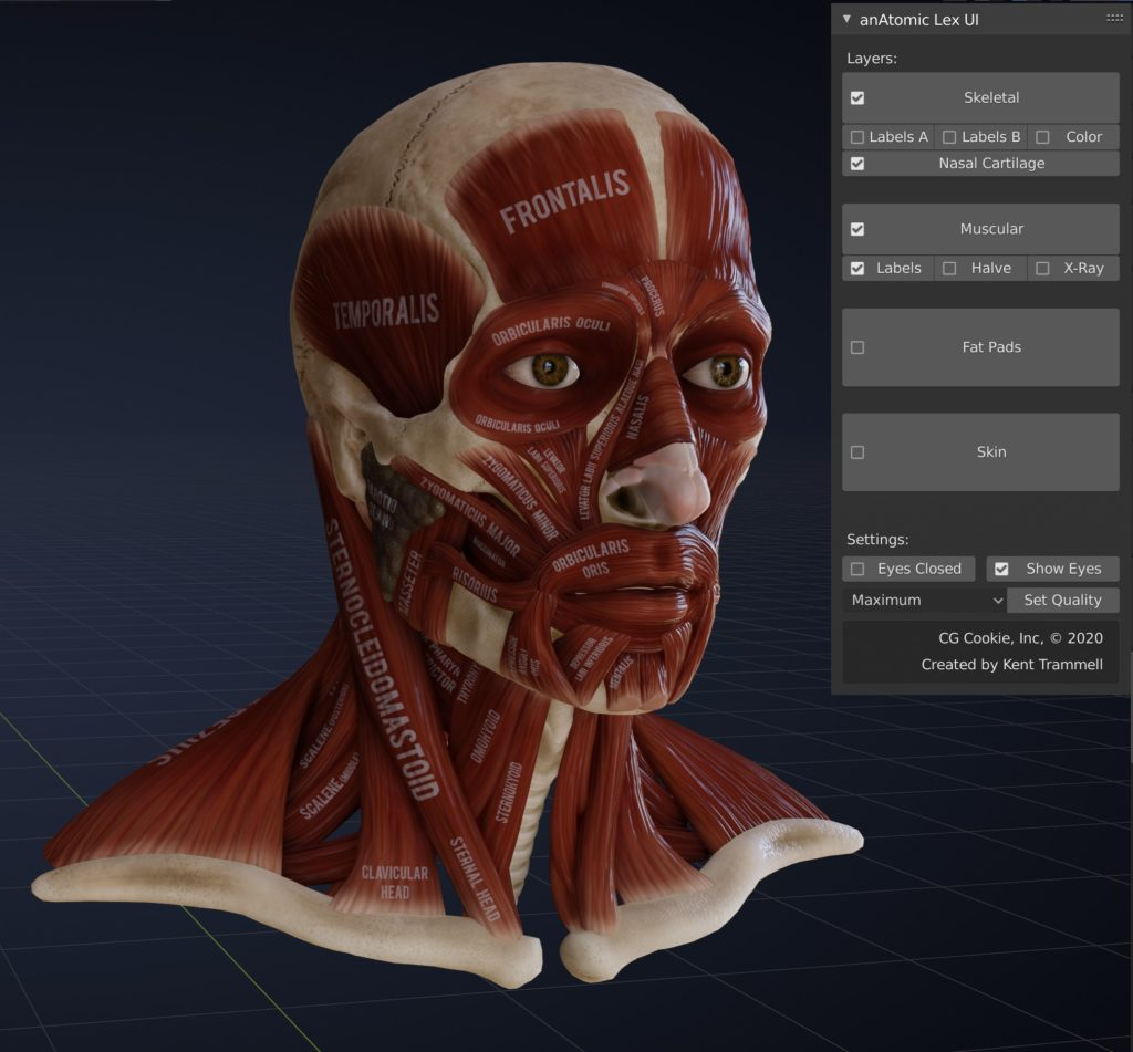 The intricate muscular system of the face is faithfully recreated